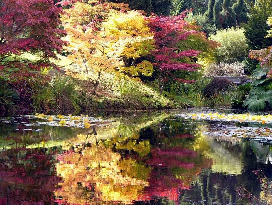 Herfst - bij lagune (11×8)