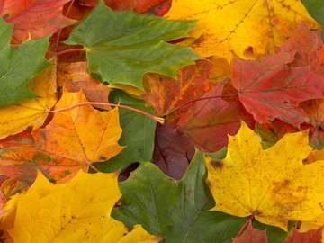 Amazing Autumn Colors