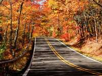 Autumn time in Michigan (USA)