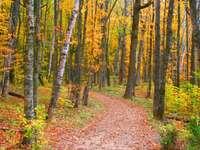Autumn in Michigan (USA)