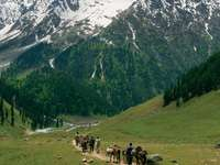 Path towards the Himalayas in Kashmir