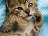 Krásné kotě