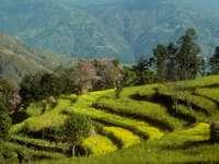 Agricultura en terrazas en la región de Helambu (Nepal)