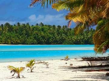 Tropical Beach (The Cook Islands)