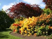 Rhododendron-struiken