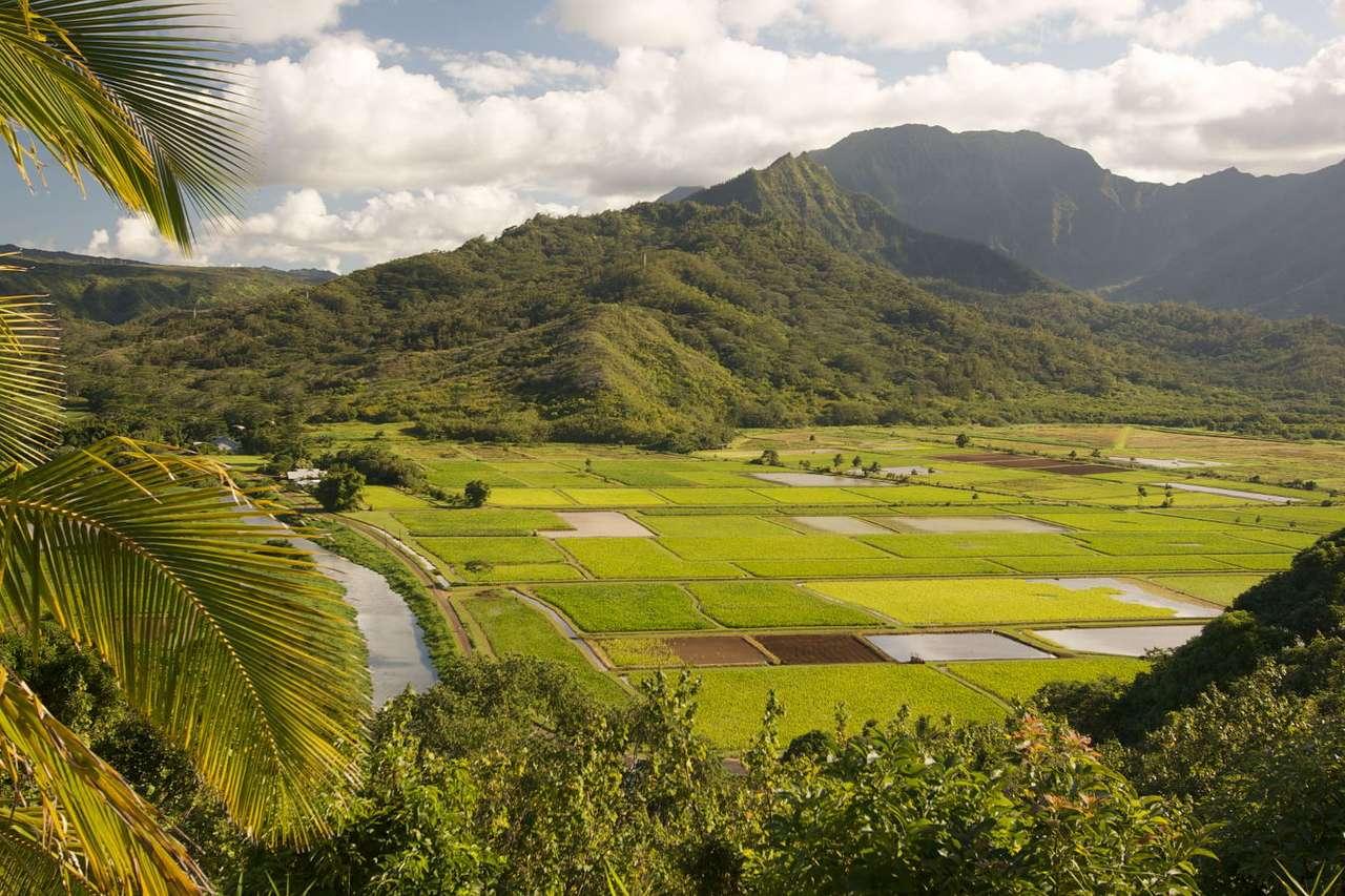 Landscape of Kauai Island (USA) - Kauai Island is one of the islands belonging to the Hawaii Archipelago. The island covers the area of 1.4 thousand km2 and there are 60 thousand inhabitants. Kauai is a volcanic island. Valleys and hi (15×10)
