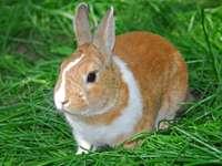 Conejo sobre hierba