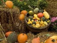 Pumpkins before Halloween