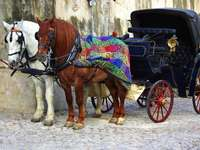 Two-horse carriage