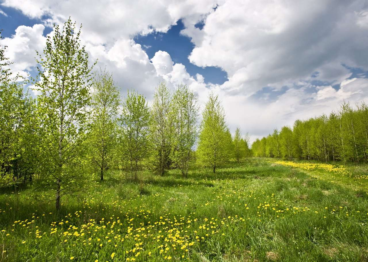Meadow - The landscape of nature in a sunny day presents itself as a wonderful and idyllic view. Thanks to flowers on a green meadow, trees full of leaves and a blue sky with snow-white clouds, meadows seem to (9×6)