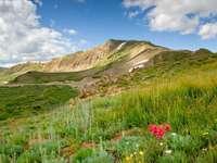 Green meadow in Loveland Pass (USA)