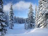 Road among snow-covered spruces