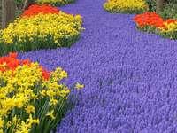 Flower carpet in Keukenhof (Netherlands)