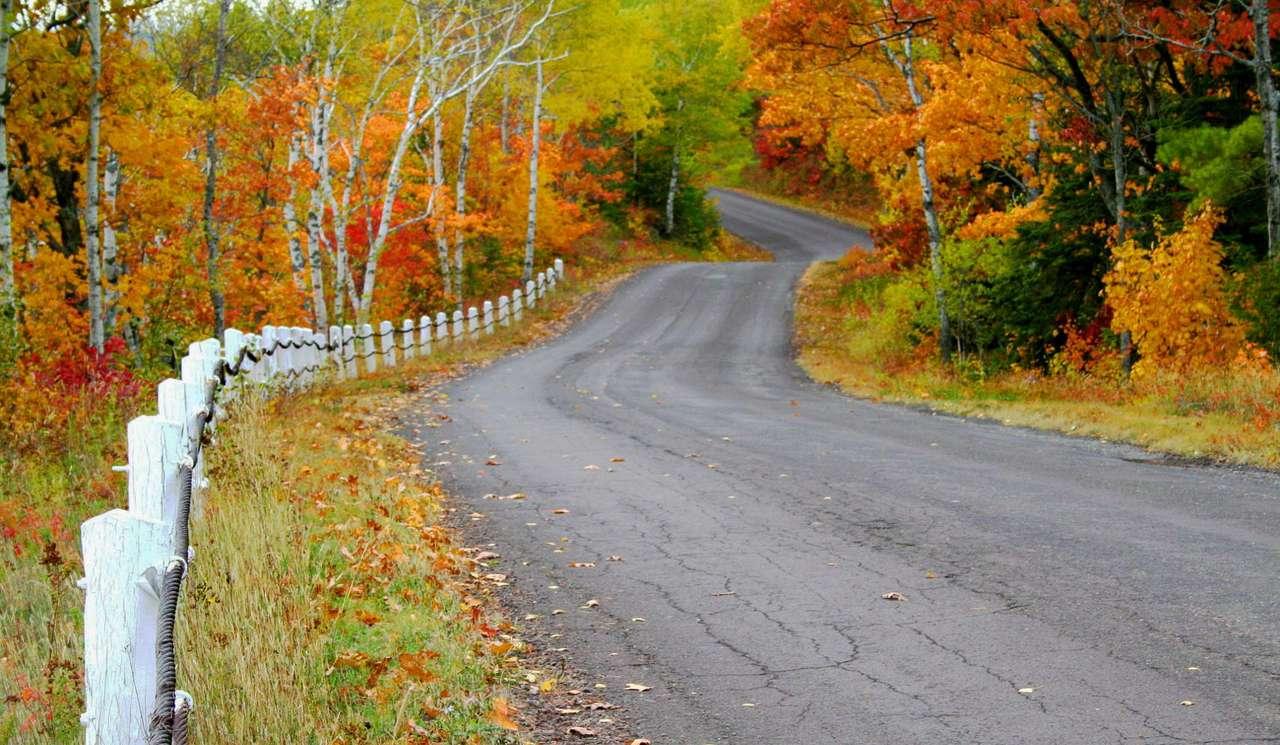 Road among autumn trees (USA)