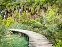 Wooden footbridge in Plitvice park (Croatia)