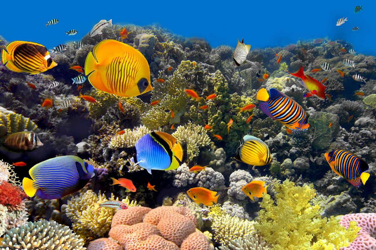 Coral reef - Oceanic coral reefs are a natural habitat for countless species. It has been estimated that coral reefs in various parts of the world are inhabited by about 25 thousand species of fish. Most of them a (8×6)