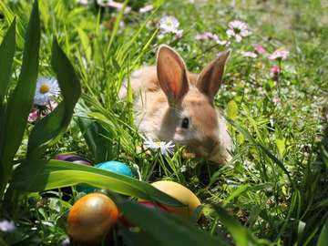 Easter bunny with eggs on a spring meadow