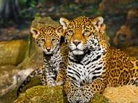 Jonge jaguar met zijn moeder