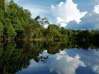 Râul Amazon (Brazilia)