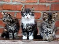 Drie jonge katten tegen een achtergrond van een bakstenen muur