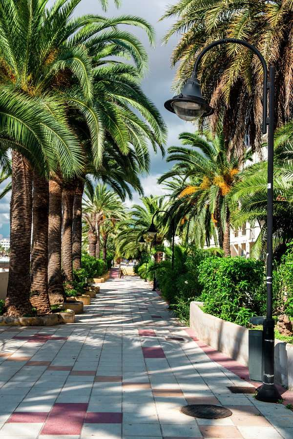 The alley of palm trees on Ibiza (Spain) - Ibiza is located in the Spanish archipelago of Balearic Islands. The island has an abundance of leisure facilities as there are numerous hotels, discos and bars. Tourists who crave for paradise-like h (8×12)