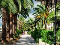 The alley of palm trees on Ibiza (Spain)