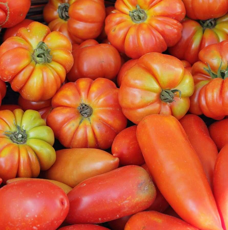 Various species of tomatoes