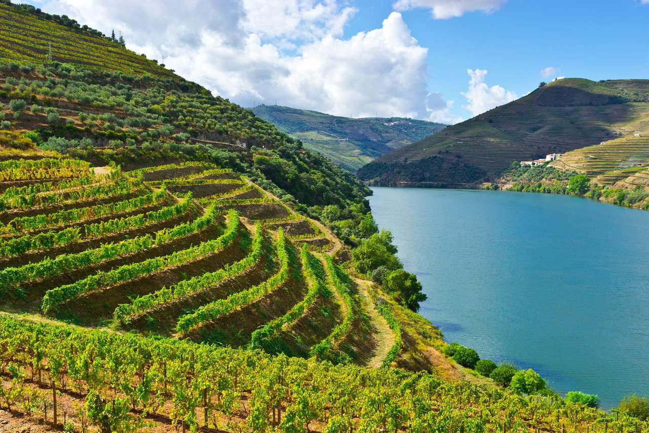 Vineyards in the valley of the River Douro (Portugal)