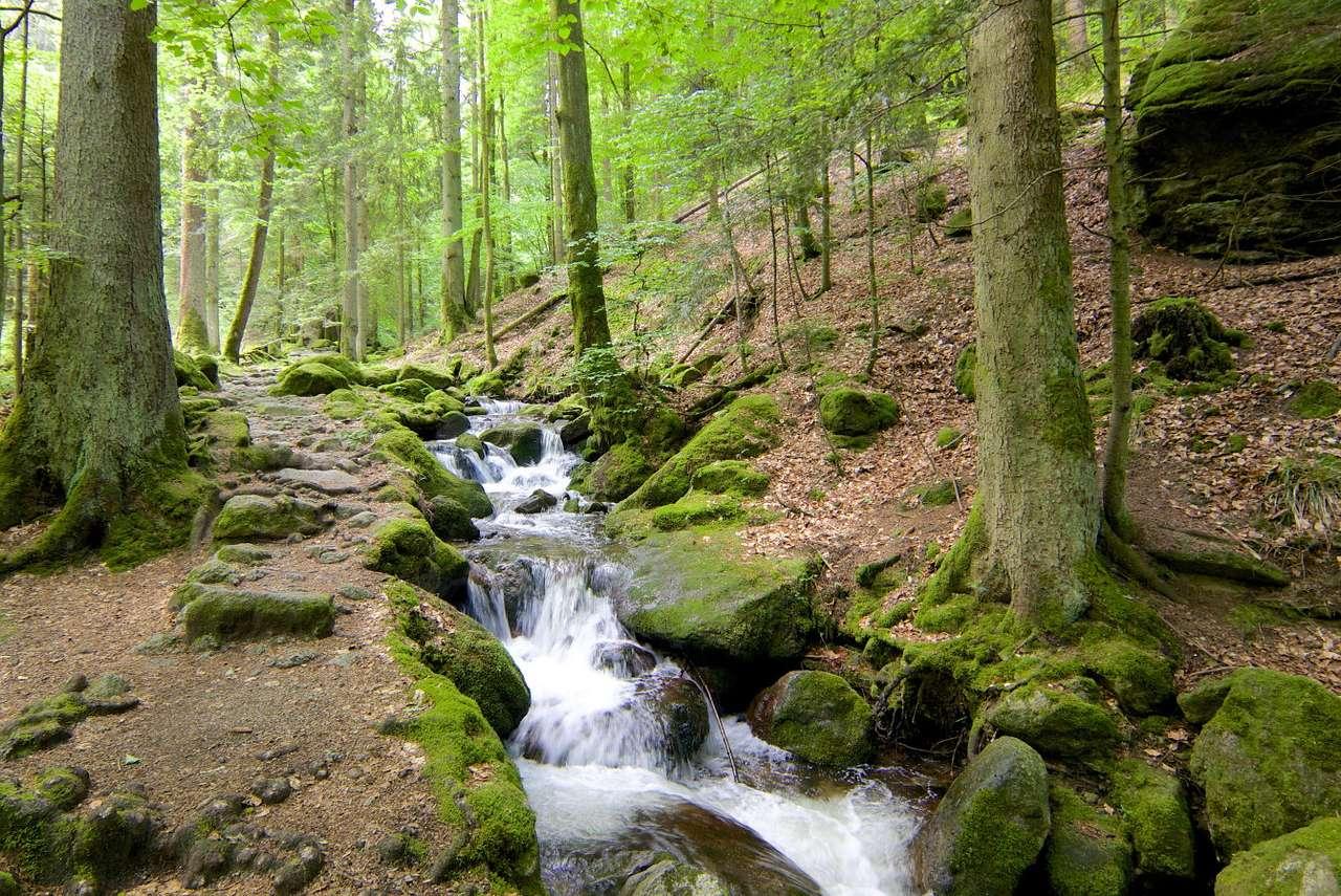 Flux rapid în Pădurea Neagră (Germania)