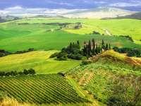 Pajiști și câmpuri în Val d'Orcia (Italia)