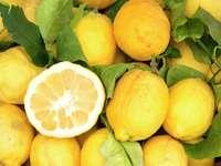 Lemons from Sorrento