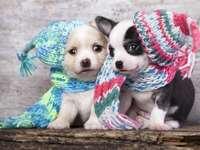 Κουτάβια που φορούν μάλλινα καπέλα