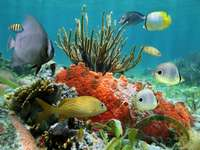 Fish in the Caribbean Sea
