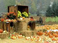 autumn climates