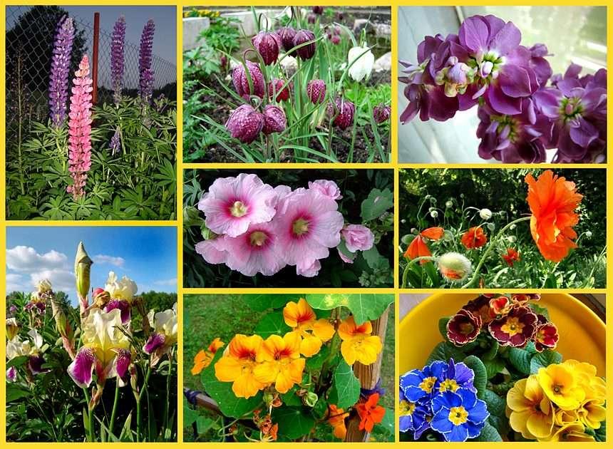 Et la continuation des fleurs printanières