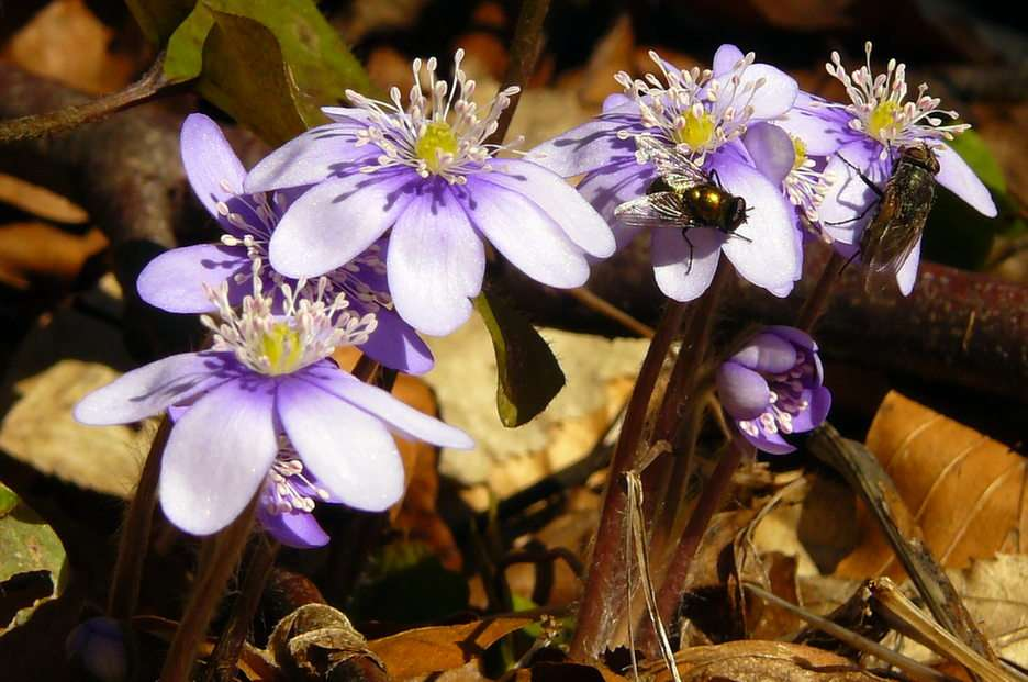 flori mici