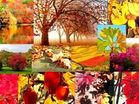 Collage d'autunno