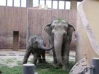Elefanti.