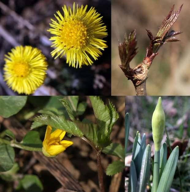 първи следи от пролетта :-) puzzle
