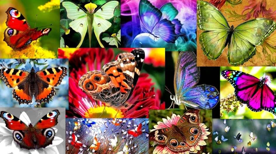 Пеперуди пъзел от снимката