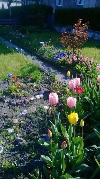 printemps sur la parcelle 2