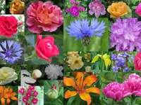Koláž - květiny