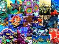 Cudeńka rafy koralowej