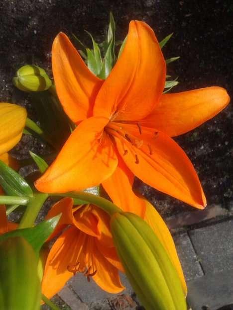 květiny puzzle