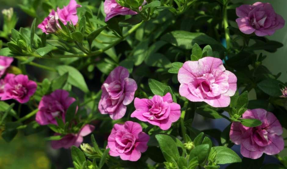 Blumen Puzzle Kostenlos Spielen