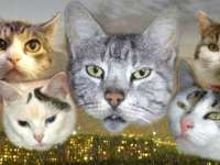 Cat Mink
