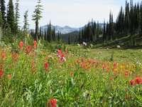 mount revelstoke wildflowers