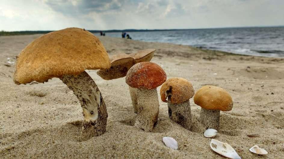 Ilyen tengerpart ...