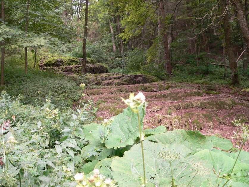 Waldkaskade