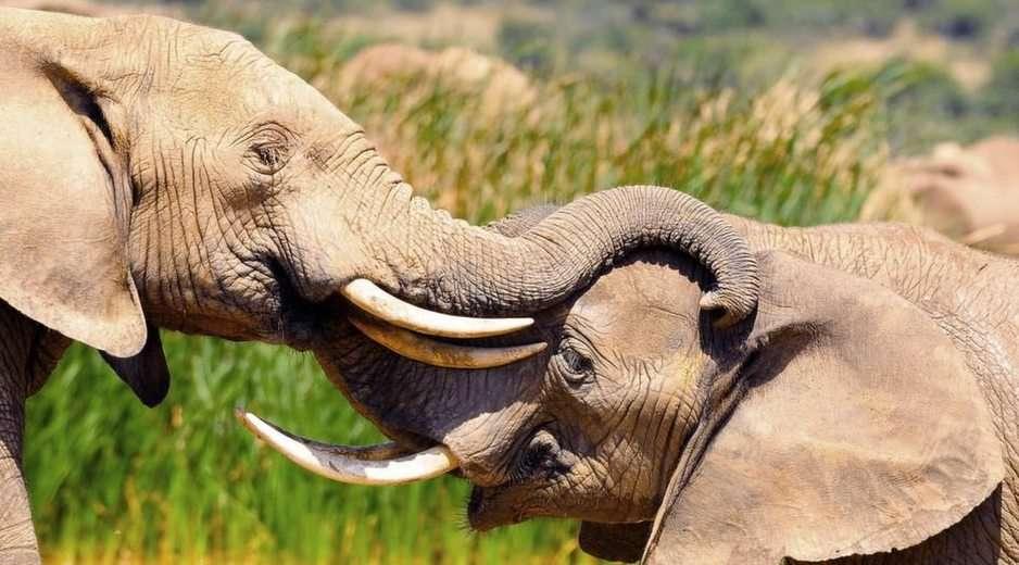 elephant online puzzle